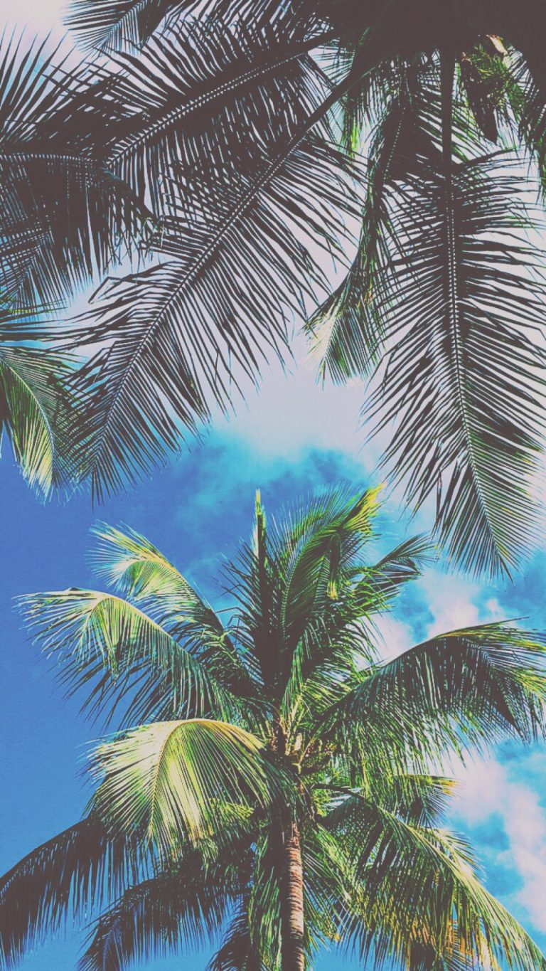palm wallpaper 124